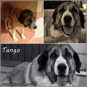 tango_col